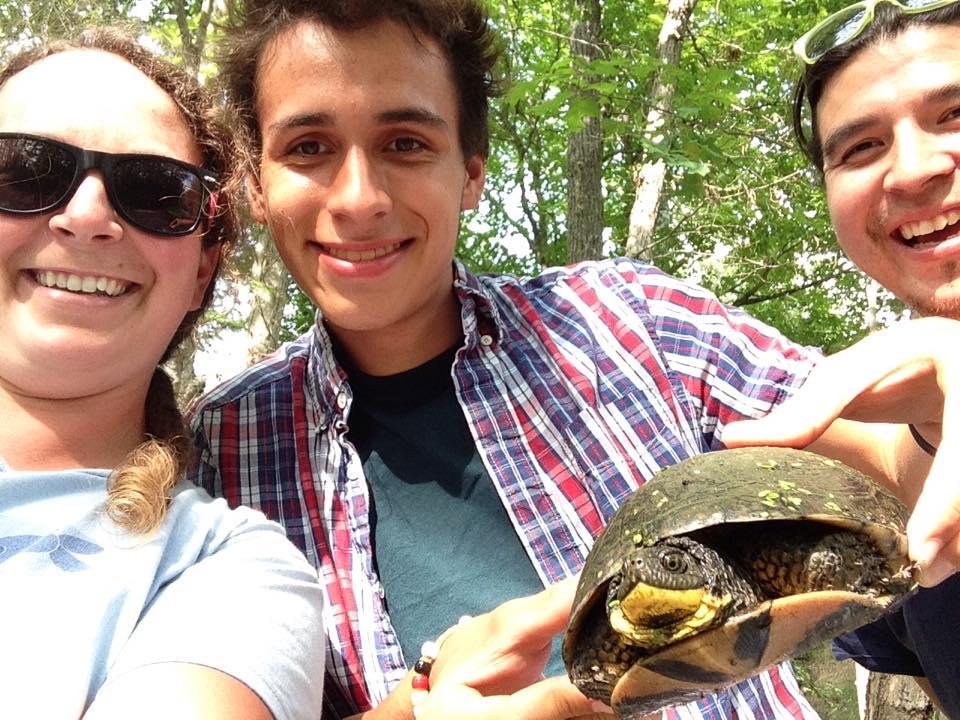 TRACKS turtle