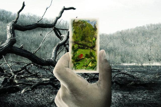 reimagine forest