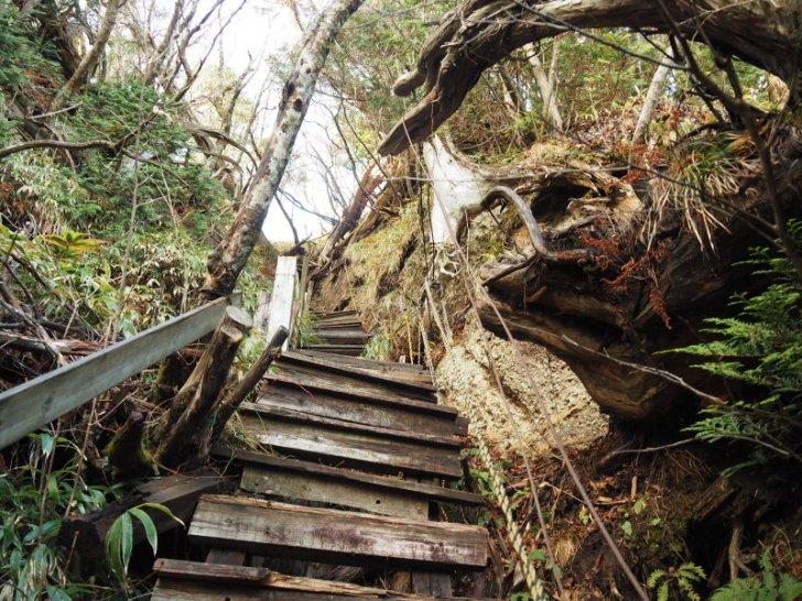 大日山 階段