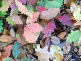 Herfst 7