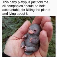 Tag someone to spread the wise baby platypus' message!  Baby Platypus also has s...