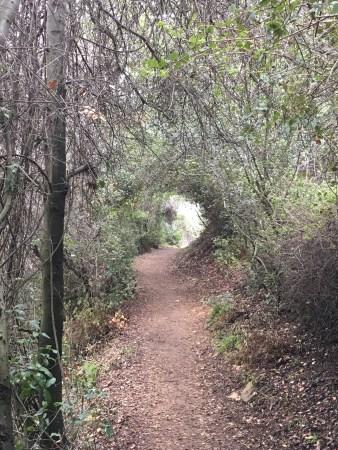 Hobbit Trail! Gabrielino Trail