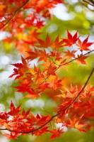 京都光明寺の紅葉の見ごろとアクセス!駐車場はパークアンドライドで