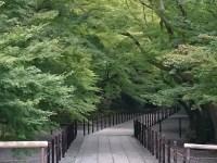 京都光明寺の紅葉になる前の緑のトンネルをご覧ください