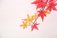 そうだ、京都の紅葉を見に子どもを連れて行こう!のリンク集