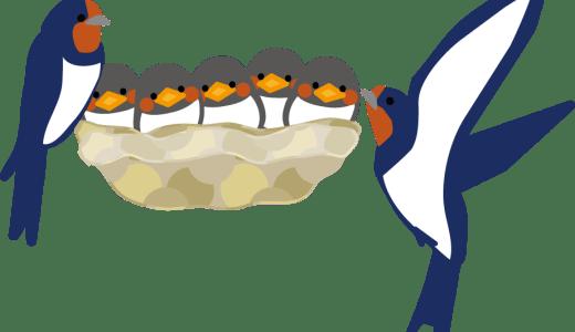 ツバメの巣ハンターの年収や仕事内容が気になる!資格は必要?
