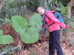 Des feuilles aussi grosses que moi !