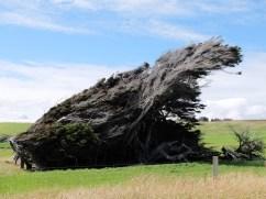 Un peu de vent par ici