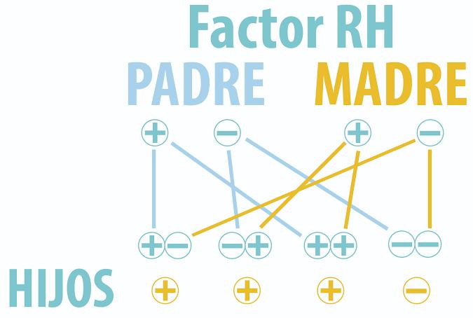 Factor Rhesus (RH)