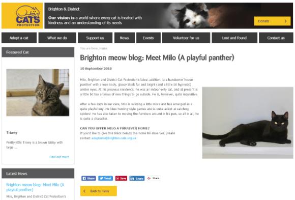 brighton-cat-news Jono reviews: Cats Protection