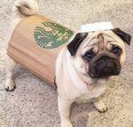 9 Best Last Minute & DIY Dog Halloween Costumes   SO Easy!