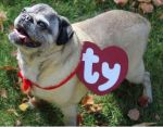 8 Interesting Dog Costumes for Dogs Who Hate Costumes