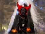5 Dog Halloween Costumes Modeled by Mr. Binky Himself