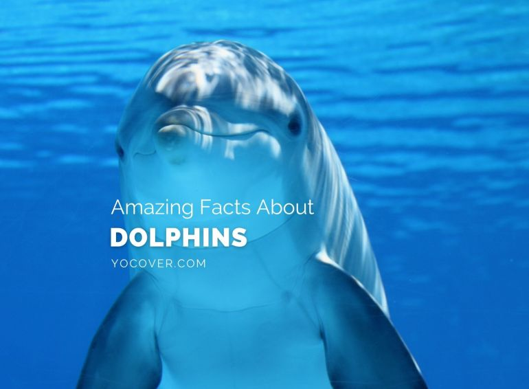Facts about Dolphin