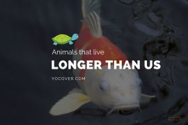 Animals That Can Live Longer Than Humans