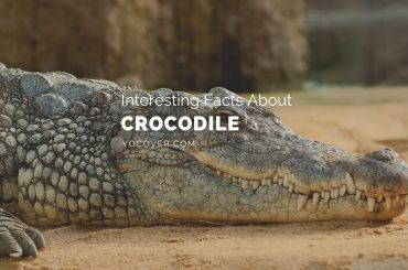 facts about crocodile