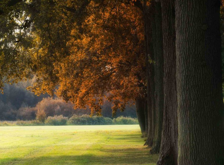 14 Exciting Facts About Oak Trees 1
