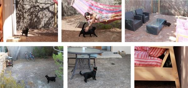gato negro investigando