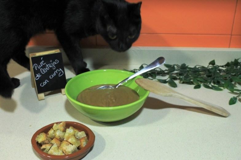 Gato lentejas curry