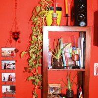 Los potos (y cómo trasplantarlos) - Plantas para todo el año (I)
