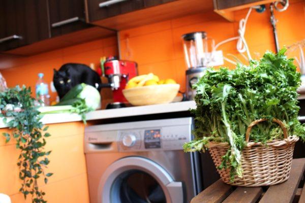 escarola verduras deco