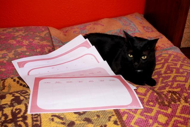 gato con organizador