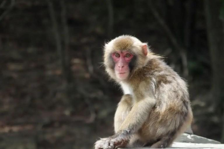 【淀川区・西淀川区】淀川区内から西淀川区内へ・・・。サルが出没しているそうです! ご注意ください!