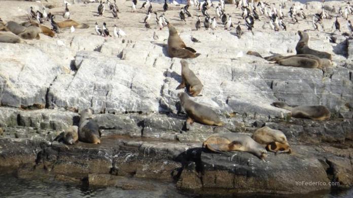 Cormoranes y lobos marinos en un islote