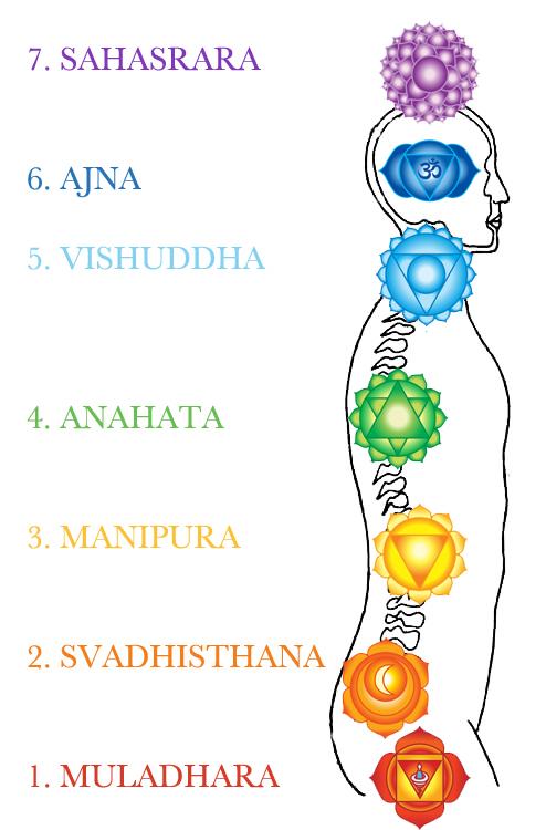 7 chakras colonne vertebrale yoga&vedas