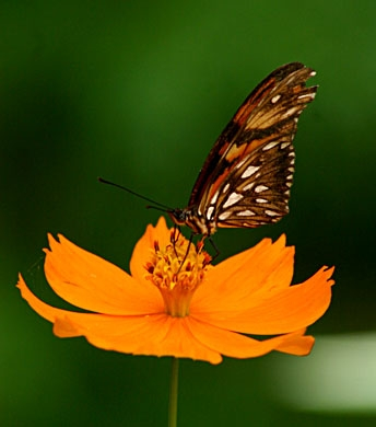 mariposa-y-flor-naranja