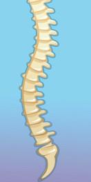 spine on blue backbround