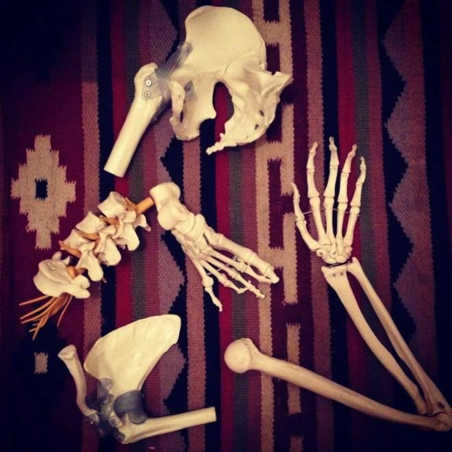 bones rug learn yoga anatomy broken sample skeleton