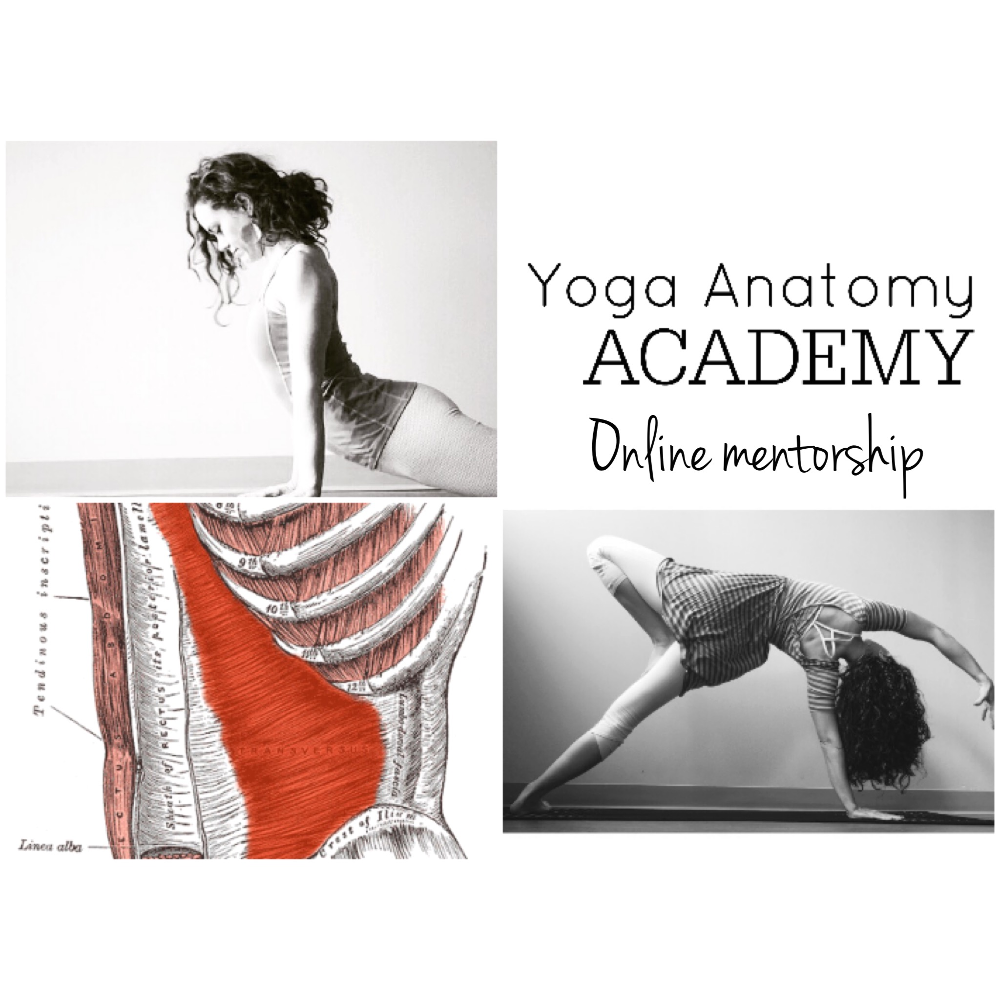 In-Depth, 12-Week Online Yoga Anatomy Mentorship with Dr. Ariele Foster