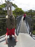 Valley Of The Giants Headstand, Walpole, WA, Australia