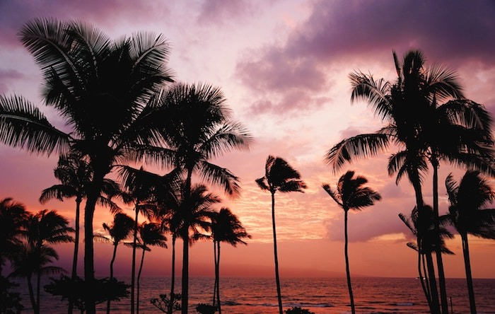 Goa Sunset and palm trees