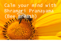 Bhramari Prayanama or Bee breath