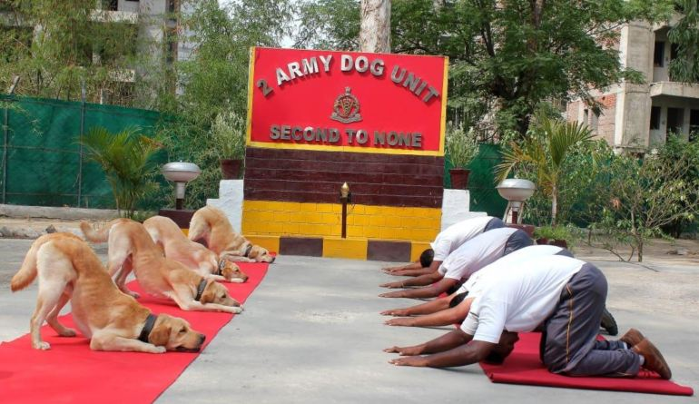 Dogs Doing Yoga