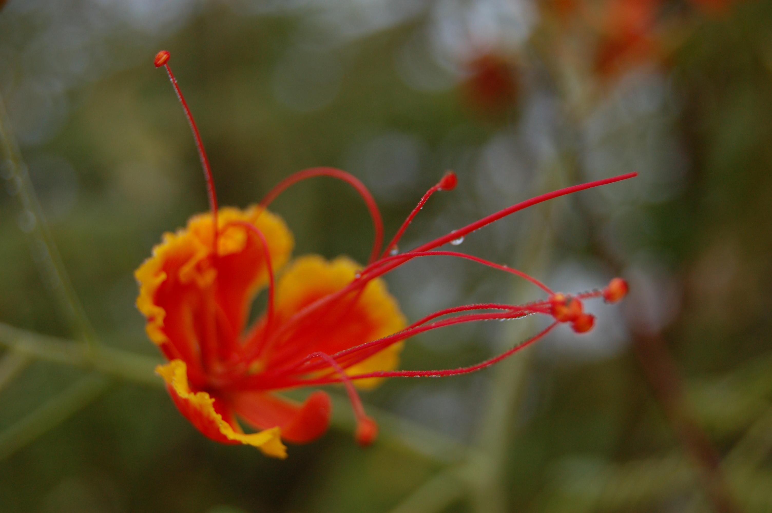 Blüte rot orange, Yogakurse innsbruck