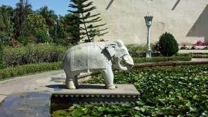 Wasser Seerosen Elefant © Annette Bauer yoga-xperience.de