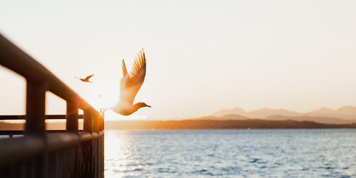 Vrijheid meditatiereis