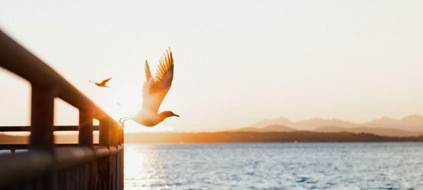 Meditatiereis voel je vrij