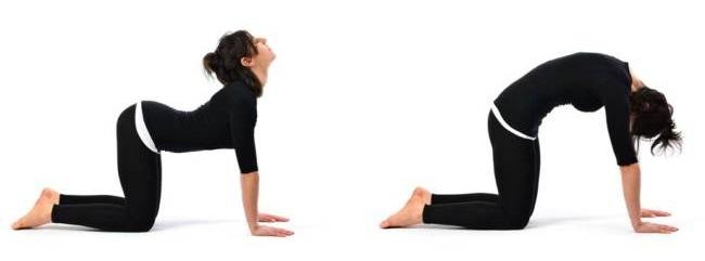marjariasana-postura-del-gato-yoga