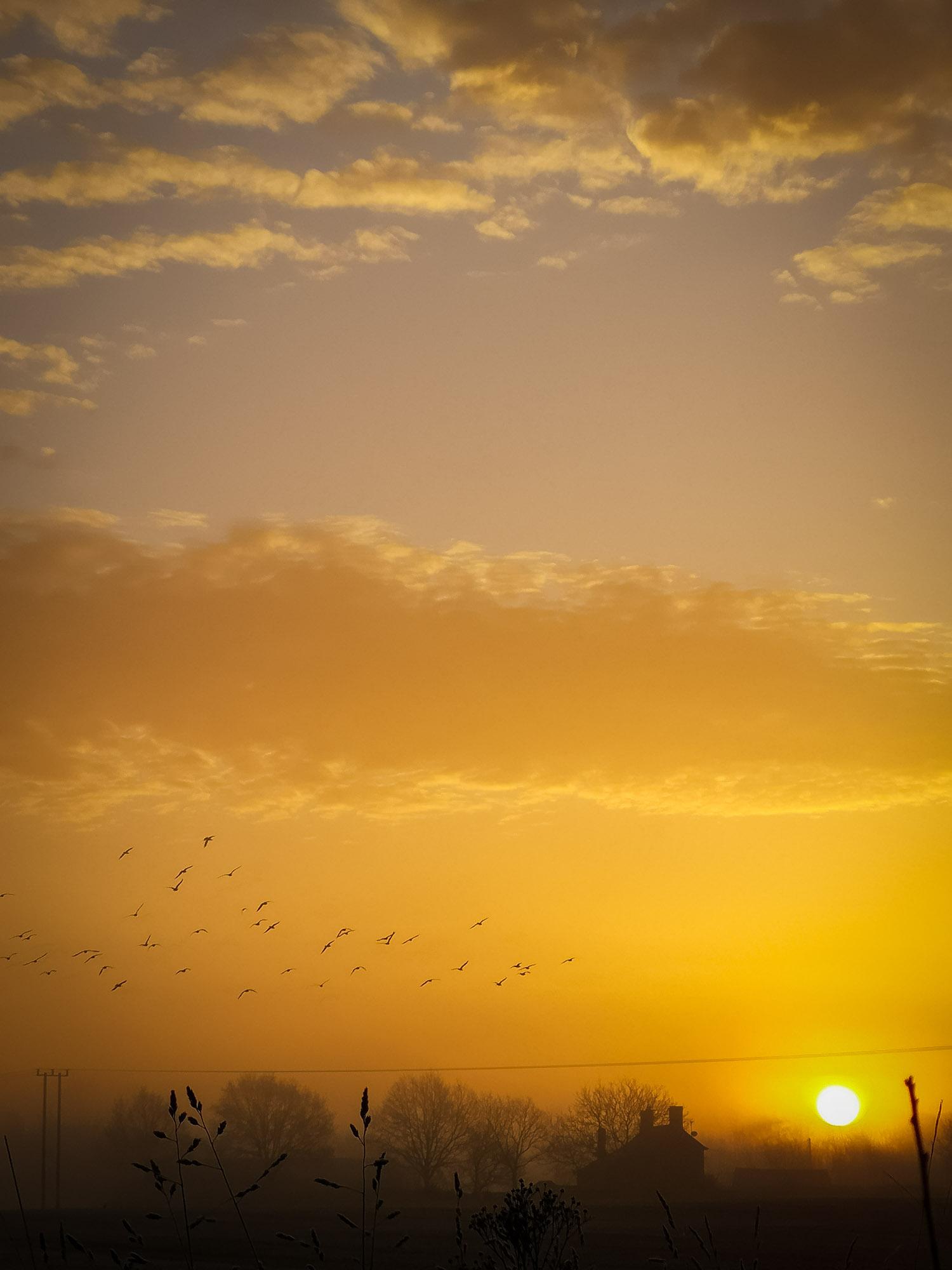 Sunrise walk yogavision 5