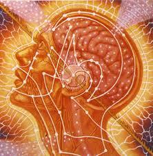 yogi brain  7 способов улучшить возможности своего мозга по Аюрведе: питание для работы мозга образ жизни аюрведа