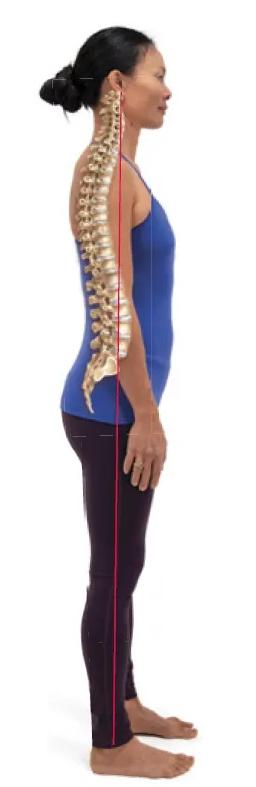 Анатомия позвоночника: как предотвратить и облегчить боль в спине:
