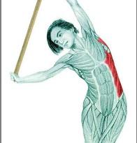 Инвентарь для растяжки мышц: