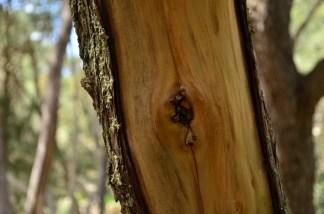 Buskett Forest_587