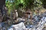 Caunos Ruins_168