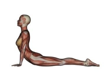 Image result for Cobra Posture (Bhujangasana)