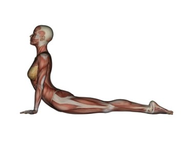 Image result for Cobra Posture (Bhujangasana)